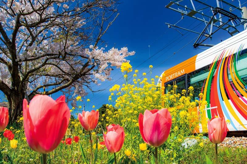 富山の春 四重奏