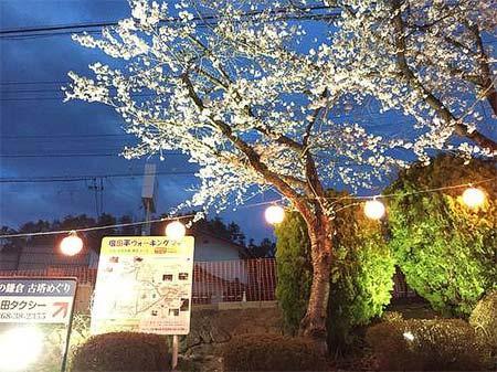 上田電鉄,別所温泉駅前の桜をライトアップ