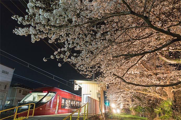 富士急行「桜キャンペーン2019」実施