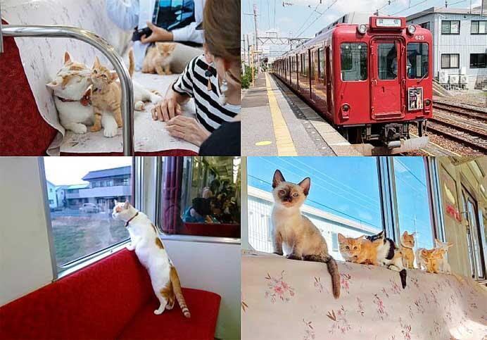 養老鉄道,「WEBねこカフェ列車」を開催