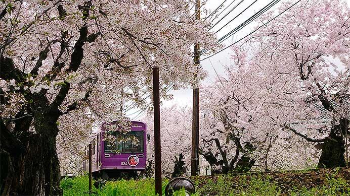 「嵐電」と桜めぐり旅