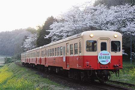 小湊鐵道で「夜桜懐石料理列車」運転