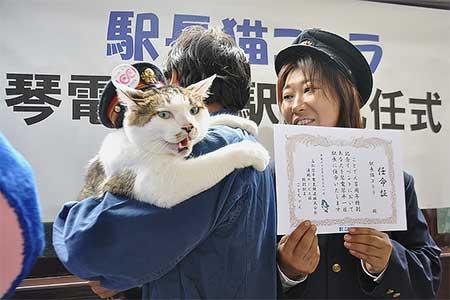 駅長猫「コトラ」の琴電琴平駅長就任式