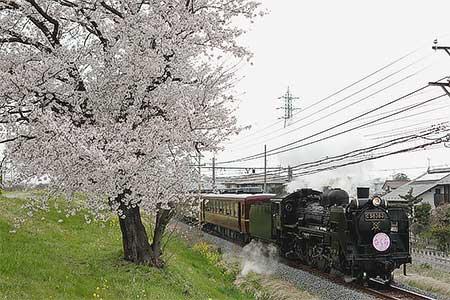 """秩父鉄道で""""SLさくら号""""運転"""