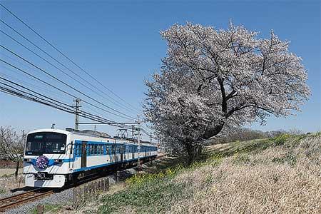 秩父鉄道で急行「さくら号」運転