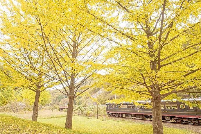 """京都丹後鉄道,""""丹後くろまつ号""""の2019年秋・冬商品を販売開始"""