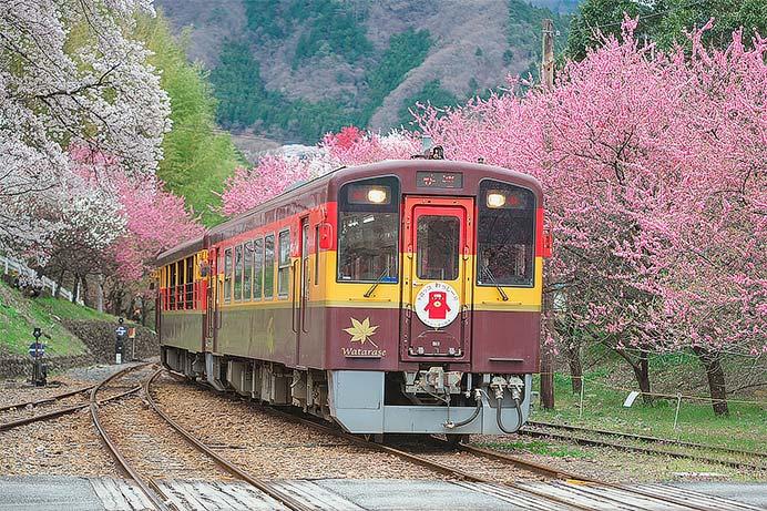 わたらせ渓谷鐵道で「花桃号」が運転される