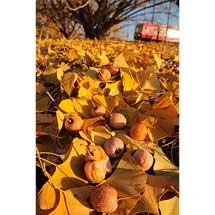 12月14日〜20日キヤノンフォトクラブ「れいるうぇいず」写真展「香しき鉄道」開催