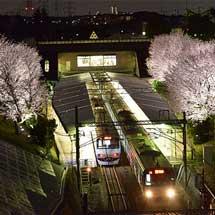 3月16日〜4月14日相鉄,弥生台駅の桜をライトアップ