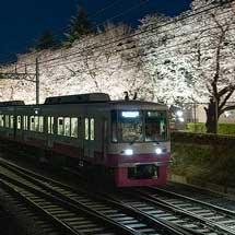 3月24日〜30日新京成電鉄,線路脇の桜並木をライトアップ