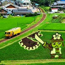 明知鉄道沿線の「田んぼアート」が見ごろを迎える